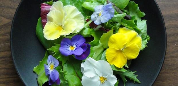 Flores comestíveis: como cultivar em casa e usar em receitas (Foto: Sarah Braun/Flickr)