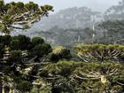 Corredores ecológicos preservam espécies em área de 10 mil km²