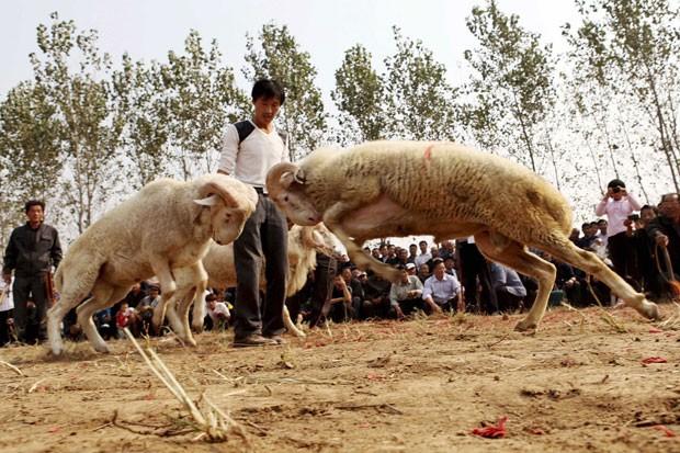 Luta entre bodes atraiu mais de 150 pessoas no domingo (13) em Liaocheng, na província chinesa de Shandong (Foto: Stringer/Reuters)