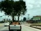 Vídeo mostra picape transportando duas árvores na carroceria, na BR-153