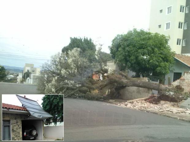 Em Ponta Grossa, árvores caíram. Moradores também tiveram prejuízos até nas garagens de casa (Foto: Lincon Mioduski Ferreira e Luciano Augusto/VC no G1)