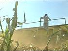 Agricultores de MT devem produzir a maior safra de soja do país