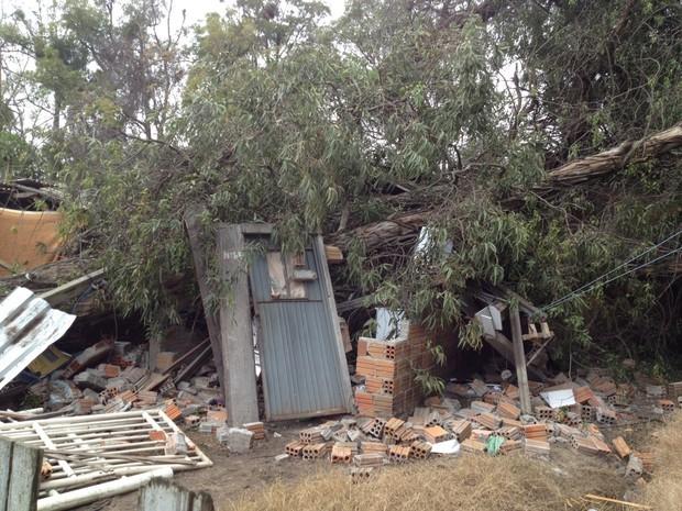 Árvore cai sobre duas casas em Rio Grande (RS) (Foto: William Silva/RBS TV)
