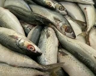 Aumenta o número de consumo de peixes na quaresma (Foto: Reprodução Bom Dia Rio)