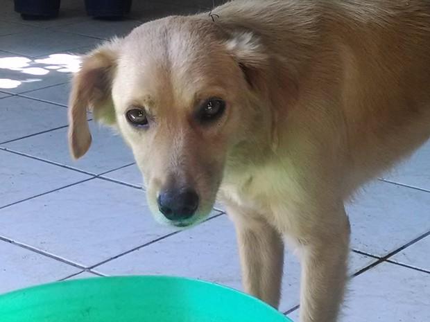 Cachorro cuidado pela ONG Paraíso dos Focinhos. (Foto: Cristina Boeckel/ G1)