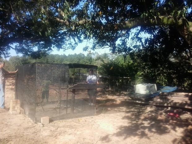 Canários são soltos por ONG em Cerquilho, SP (Foto: Giliardy Freitas / TV TEM)