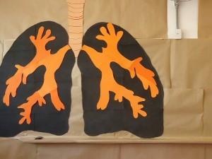 Feira de Ciência ensina todo o corpo humano em Itu, SP (Foto: Divulgação)