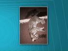 Turista de visita à fronteira flagra gato montês morto após ser atropelado