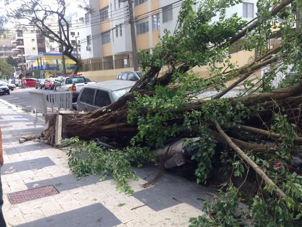 Árvore caiu sobre duas motos estacionadas em Guarujá (Foto: Marco Antônio Dutra/Arquivo Pessoal)