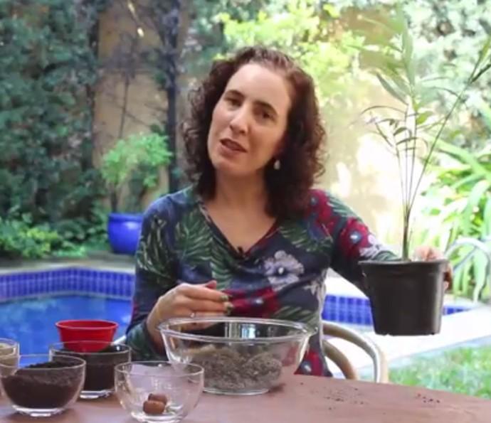 Paisagista Nô Figueiredo mostra como fazer transplante de vaso muito fácil (Foto: Divulgação)