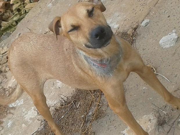 Cachorra era mantida amarrada com corda muito apertada no pescoço (Foto: Arquivo Pessoal/Marco Antônio Rodrigues )