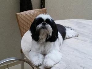 Cão Lipe foi castrado em Uberlândia (Foto: G1)