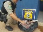 Polícia Rodovia do Pará apreende animais silvestres na BR-010