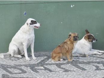 Câmara deve discutir projeto de lei de proteção aos animais (Foto: CMC / Anderson Tozato / Divulgação)