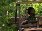 Seca compromete a qualidade e a produtividade do café arábica em MG