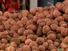 Produtores de batata vivem realidades diferentes em Minas Gerais