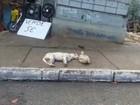 Pato faz carinho em cachorro em avenida de Salvador; assista ao vídeo