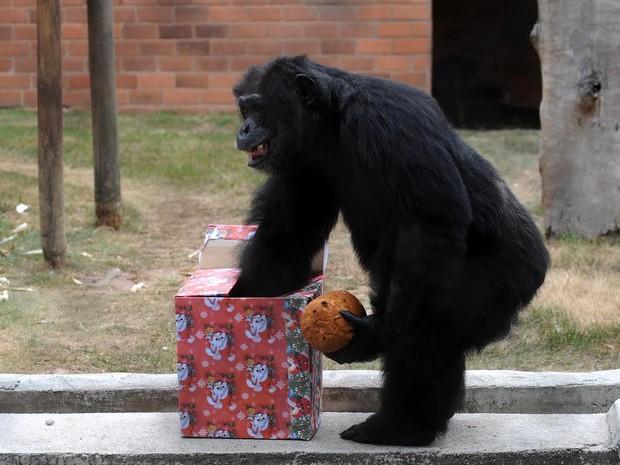 Animais do zoológico do Rio receberam cestas de frutas e panetones de presente neste Natal (Foto: Alexandre Durão / G1)