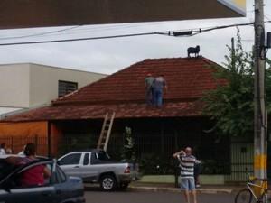 Homens subiram no telhado para salvar bode (Foto: Reprodução / TV TEM)