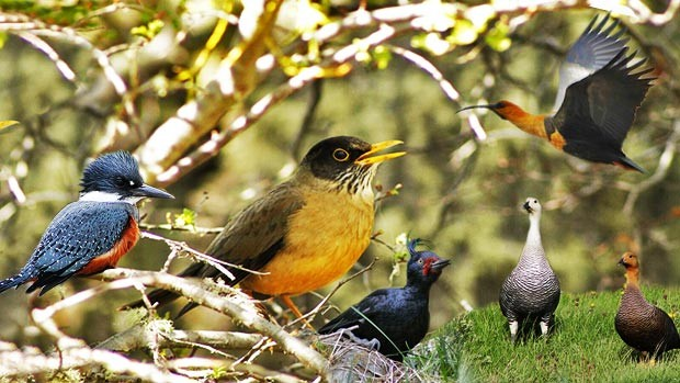As aves de Ushuaia, uma cidade no fim do mundo (Juan Bautista Cabral/Você no TG)