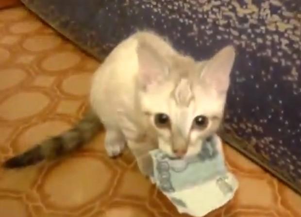 Felino fica bravo quando o dono tenta recuperar sue dinheiro (Foto: Reprodução/YouTube/Roman A)