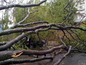 Árvore caiu sobre carro no Centro de Piracicaba durante temporal nesta quarta-feira (8) (Foto: Claudia Assencio/G1)