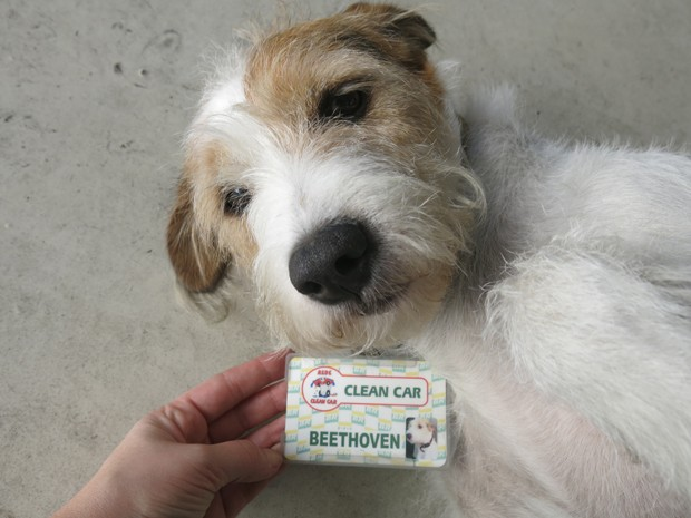 Vira-lata foi adotado e ganhou crachá personalizado (Foto: Anna Gabriela Ribeiro / G1)