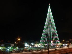 Árvore de Mirassol - Natal RN (Foto: Reprodução/Inter TV Cabugi)