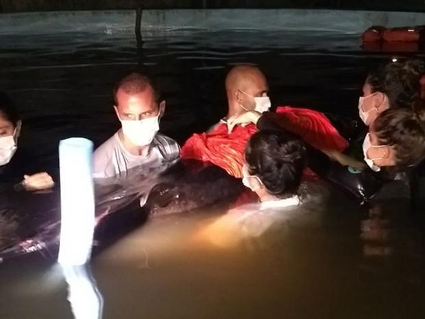 Golfinho foi retirado do mar e levado para centro de tratamento (Foto: Divulgação)