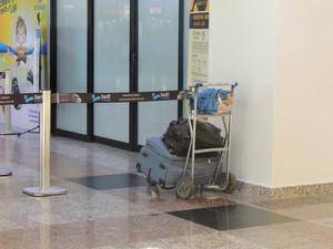 Bagagem da turista está ao lado da delegacia da PF no aeroporto (Foto: Felipe Truda/G1)