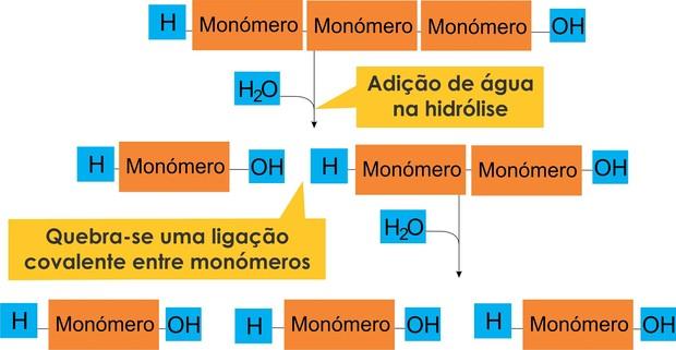 Esquema da hidrólise (Foto: Colégio Qi)