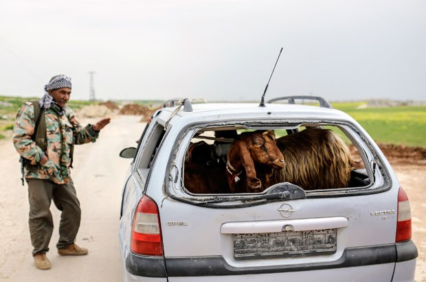 Um motorista foi flagrado no sábado (28) carregando uma cabra no porta-malas do carro ao ser parado em um ponto de fiscalização na cidade síria de Kobane (Foto: Yasin Akgul/AFP)
