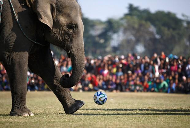 Elefantes jogam futebol em festival no Nepal (Foto: Navesh Chitrakar/Reuters)