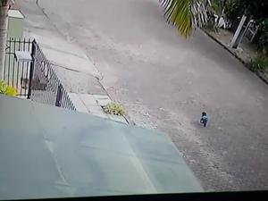 cão atropelado santa cruz do sul rs (Foto: Reprodução/RBS TV)