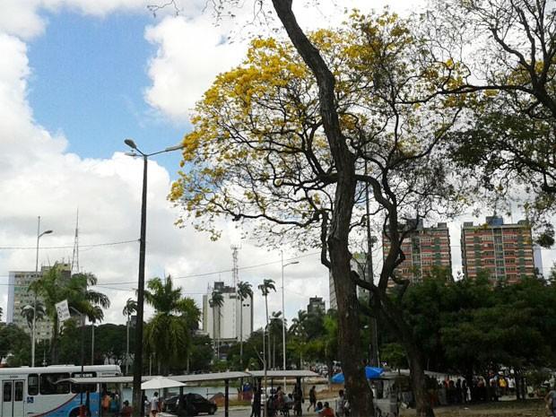 População pode contemplar bela do ipê no Parque Solon de Lucena (Foto: Natália Xavier/G1)