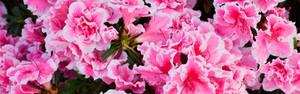 As melhores plantas para varanda (Shutterstock)
