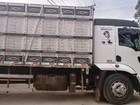 Caminhão roubado com 23 cabeças de gado é recuperado em Italva, no RJ