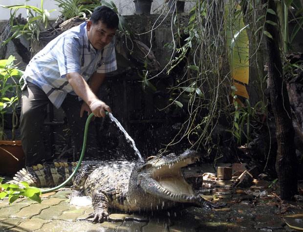 Nathip Awirut mantém dois crocodilos para fazer a segurança de sua casa na província de Pitsanuklok (Foto: Sakchai Lalit/AP)