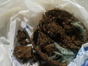Suspeita foi autuada por tráfico de drogas (Foto: Divulgação/ Polícia Civil)