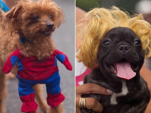 Este cãozinho ganhou a fantasia do