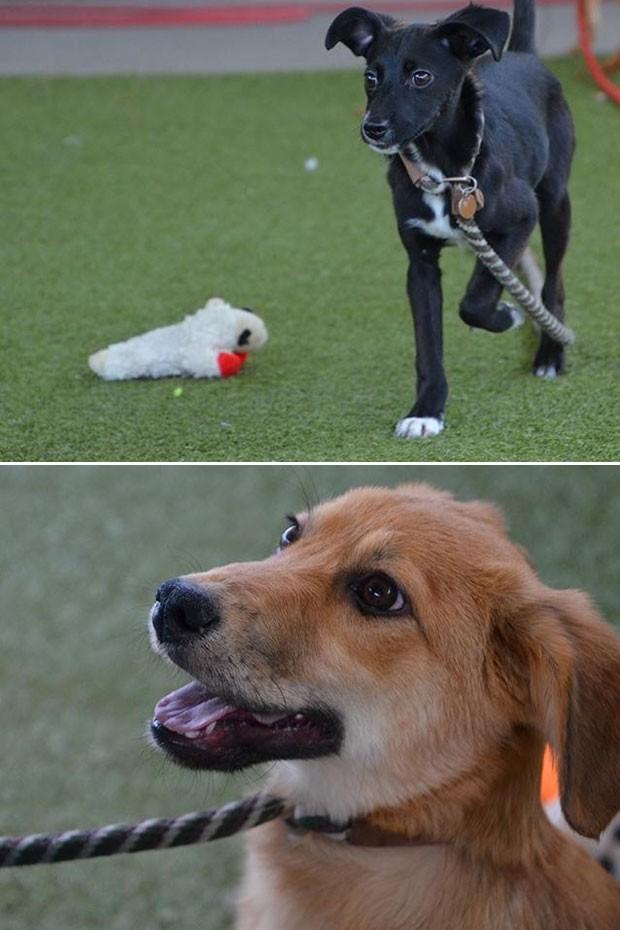 Família que caçava pokémons acha cãezinhos abandonados nos EUA (Foto: Salt Lake County Animal Services/Facebook)