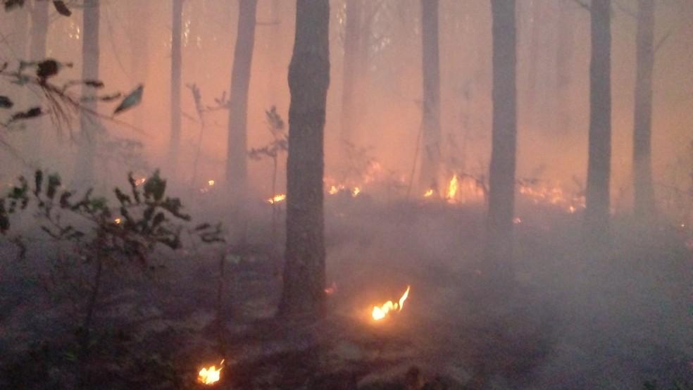Fogo atingiu área de reflorestamento de pinus em Irani (Foto: Bombeiros Voluntários/Divulgação)