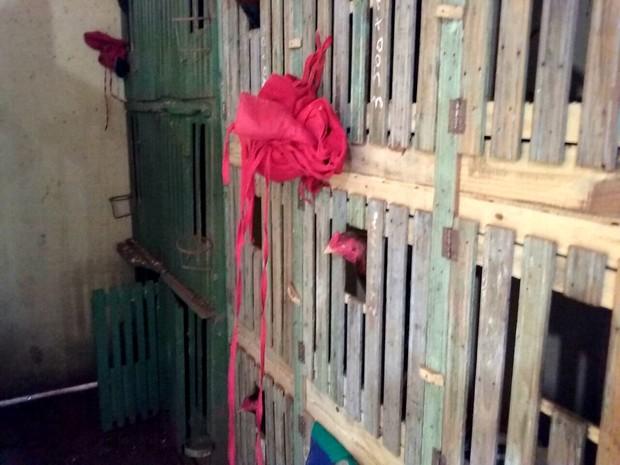 Galos ficavam em cativeiro montado nos fundos da propriedade (Foto: Divulgação/Polícia Militar Ambiental)