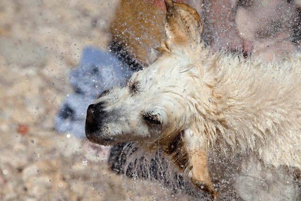 Cachorros aproveitam praia dedicada a eles na Croácia (Foto: Darko Bandic/AP)