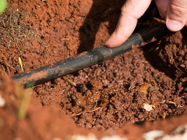 Irrigação por gotejamento pode economizar até 705 de água nas lavouras (Foto: Érico Andrade/G1)