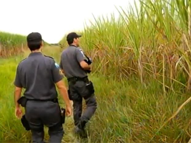 Policiais fizeram buscas por canaviais perto de onde criança desapareceu em Campos (Foto: Reprodução/InterTV)