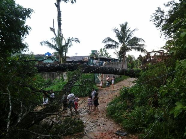 chuva derruba árvores em sjc (Foto: Arquivo Pessoal/ Edinho Guedes)