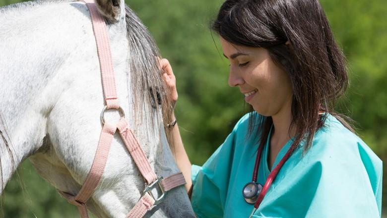 medicina-veterinaria-veterinario-profissões-do-agronegócio-cavalo (Foto: Thinkstock)