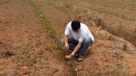 Força do Agronegócio: técnicas ajudam na infiltração da água no solo no ES