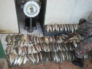 Pescado apreendido em Miranda MS (Foto: Divulgação/PMA)